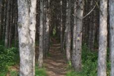 Une belle ligne droite pour courir entre les arbres