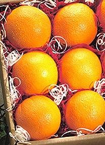 six-oranges-squared