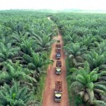 Potensi Perkebunan Masih Jadi Komoditi Jualan Riau ke Swasta