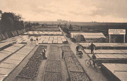 altes Foto: Gartenbau