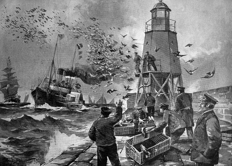 sw: Brieftauben werden aus Taubenturm am des Meer gelassen