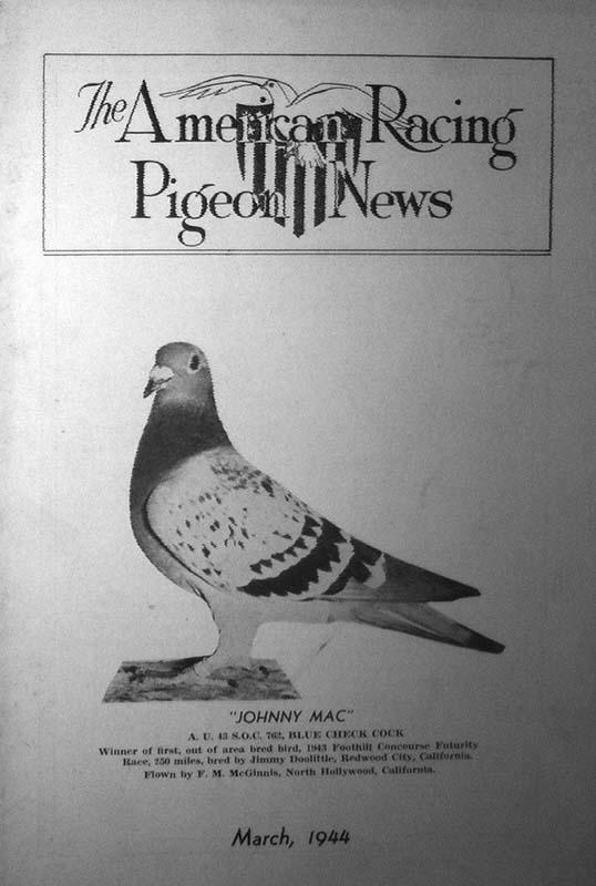 Frontbild mit Taube eines Brieftaubenmagazins