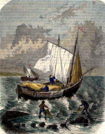 Austernfischer mit ihrem Kutter auf dem Meer