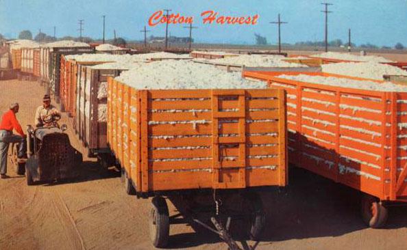 altes Foto: Baumwollernte: Baumwolle ist in Wagons verladen