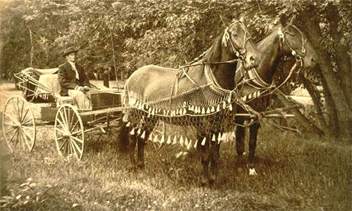 Kutsher, Kutsche, Pferde