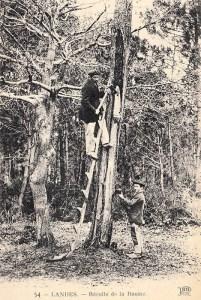 sw-Foto: zwei Männer bei der Harzernte