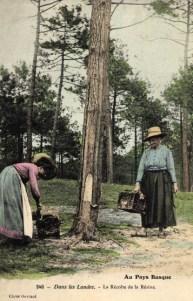 koloriertes Foto: zwei Pechlerinnen im Wald bei der Harzernte