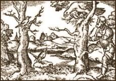 Vogrlfänger, Leimrute