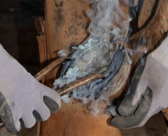 Detail-Farbfoto vom Aufbringen des heißen Hufeisens