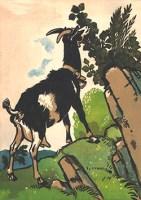 AK: schwarzbraune Ziege knabbert Blätter von einem Strauch