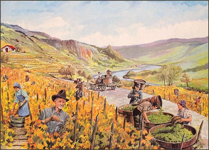 Winzer, Weinbauer, Weinberg, Weinlese, Landwirtschaft, Herbst