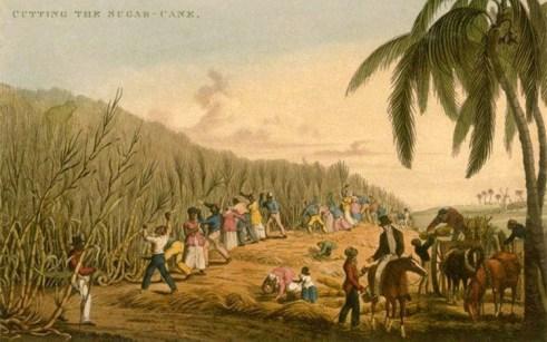Farblitho: große Plantage, viele männliche und weibliche Sklaven beim Schneiden von Zuckerrohr, vorn zu Pferd ein Aufseher unter einer Palme, hinter ihm wird Rohr verladen