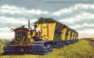 Farbfoto: Zuckerrohr wird mit Raupenschlepper, der sechs Wagongs zieht vom Zuckerrohrfeld abtransportiert