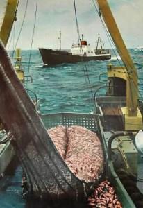 Foto: Fischdampfer mit Fischfang