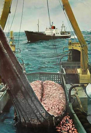 Lehrtafel: Fischdampfer mit Fischfang