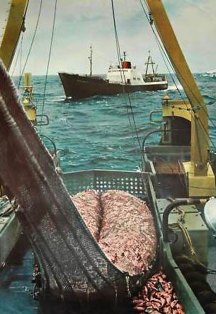 Fischdampfer, Schiff, Fischerei, Fischer