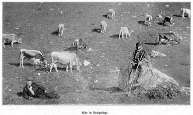 sw-Foto: Kuhhirte und Kuhjunge auf einem Stein umringt von Kühen