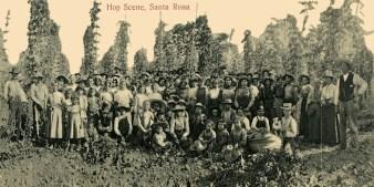 sw Gruppenfoto von vielen Frauen, Kindern und Männern auf einer Hopfenplantage - 1905