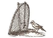 Federzeichnung: Vogel vor Falle