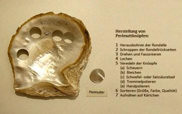 Farbfoto: Perlmuttmuschel, Rondell und Beschreibung
