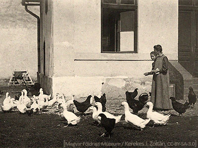sw Foto: 2 Frauen zw. Gänsen und Hühnern - 1912, Ungarn