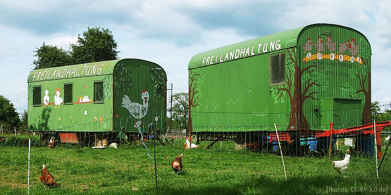 Farbfoto: mobile Freilandhaltung von Hühnern - 2016