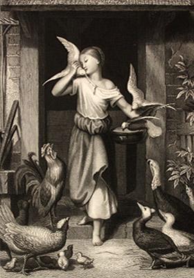 Stahlstich: junge Frau versorgt verschiedenes Geflügel ~1850