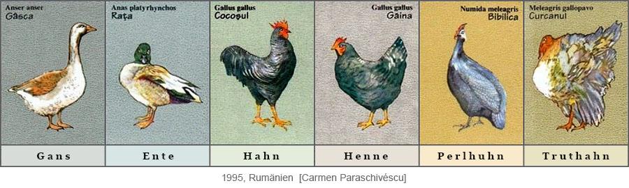 Farbdrucke: Gans, Ente, Hahn, Henne, Perlhuhn, Truthahn - 1995, Rumänien