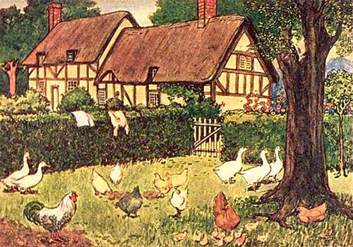 Farblitho: Geflügelgarten - 1901, USA