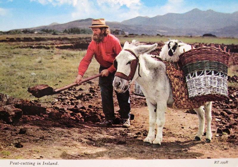 farbige Postkarte: Torfstecher schaufelt Torf; neben ihm sitzt eine Ziege auf einem Esel