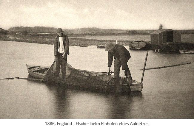 sw Foto: zwei Fischer in einem Boot beim Einholen eines Aalnetzes