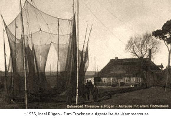 sw Fotopostkarte: ca. 6m hohe, zum Trocknen aufgestellte Aal-Kammerreuse ~1935, Rügen