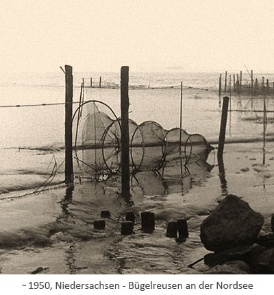 sw Foto: Bügelreusen an der Nordsee ~1950, Niedersachsen