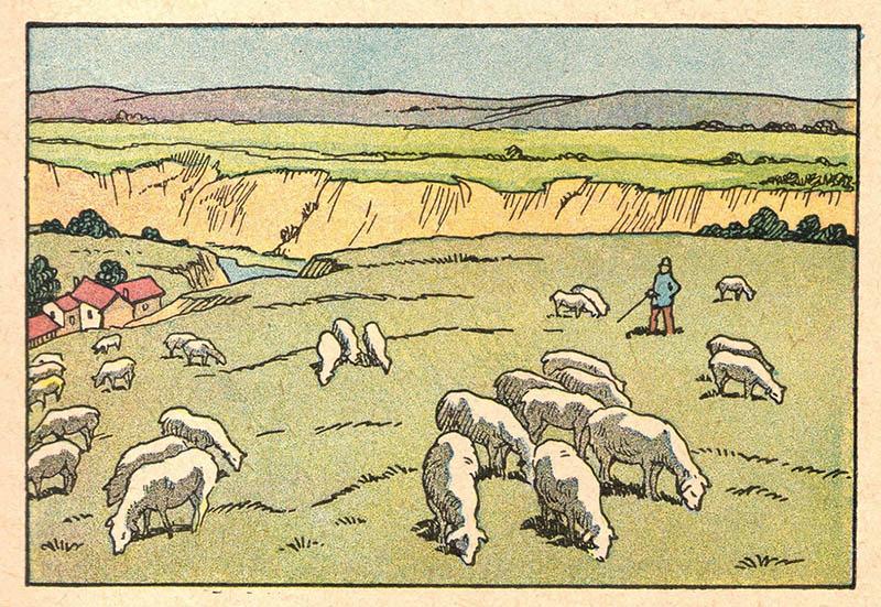 illu: Schafe hüten