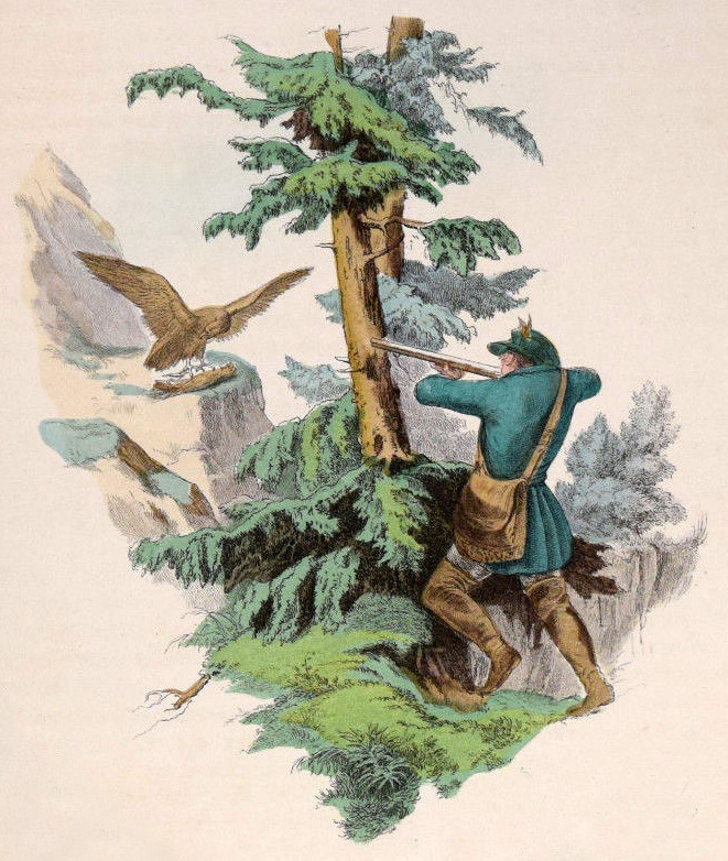 farbige Zeichnung: Jäger schießt Vogel