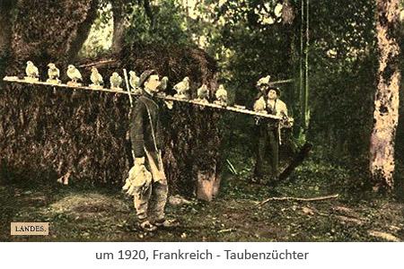 Postkarte: Taubenzüchter trägt Tauben auf einer Stange ~1920, FR