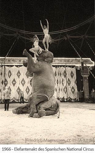 sw Foto: auf seitlich liegendem sitzt ein zweiter Elefant + obenauf 2 Artistinnen - 1966