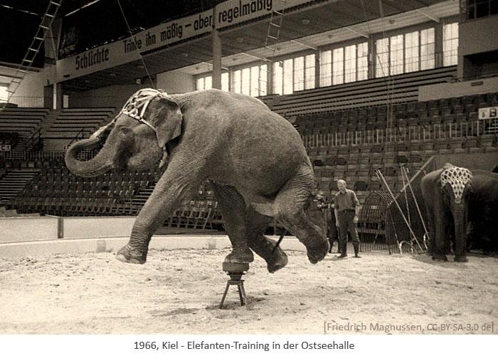 sw Foto: Elefanten-Training in der Ostseehalle - 1966, Kiel