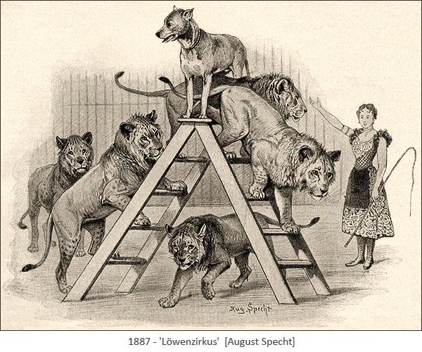 Zeichnung: Dompteuse mit 5 Löwen und 1 Hund - 1887