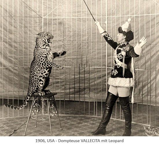 sw Foto: Dompteuse mit auf Hocker aufgerichtetem Leopard - 1906, USA