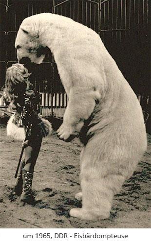 sw Fotopostkarte: Dompteuse mit aufgerichtetem Eisbär ~1965, DDR