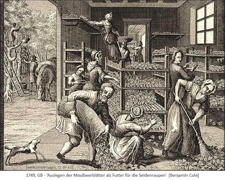 Kupferstich: Auslegen der Maulbeerblätter als Futter für Seidenraupen - 1749, GB