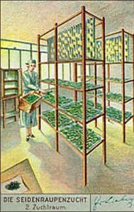 Sammelbild: Raupenzuchtraum - 1937