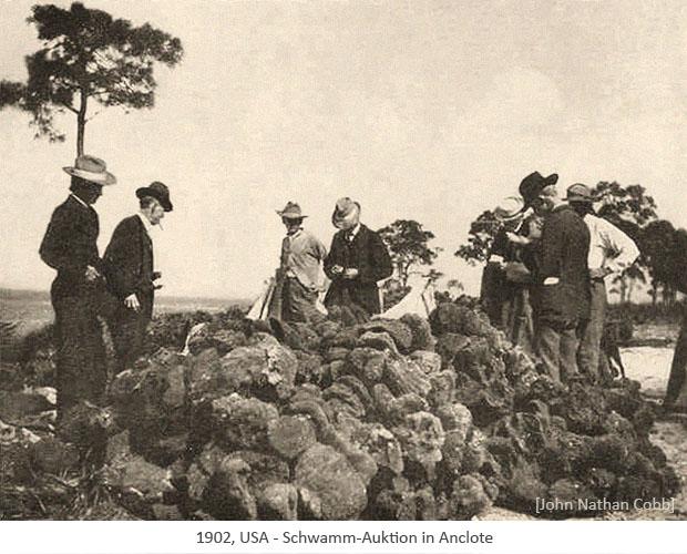 sw Foto: Schwamm-Auktion in Anclote - 1902, USA