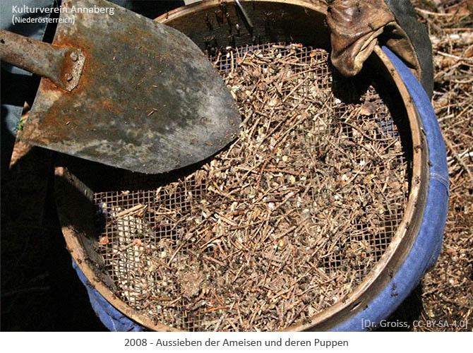 Farbfoto: Aussieben der Ameisen und deren Puppen - 2008, AT