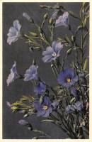 Pflanze: blaue Blüten