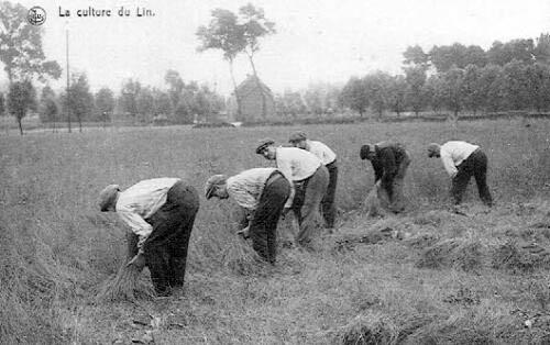 sw-AK: Männer bei der Flachsernte