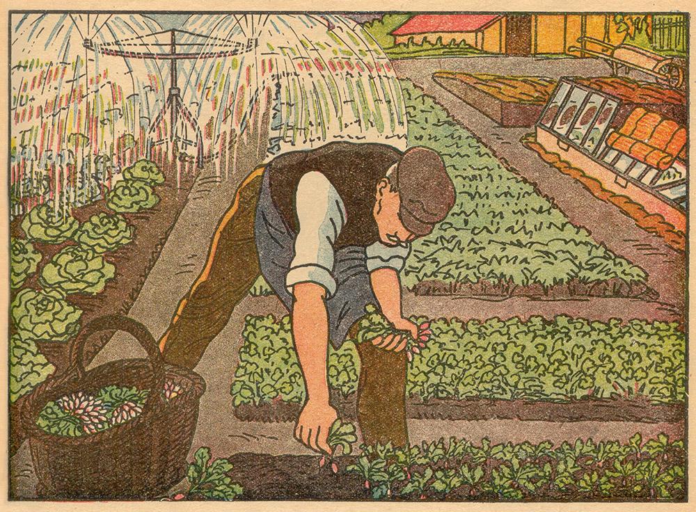 Gärtner zupft Radieschen aus dem Beet