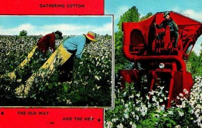 PK: Baumwollernte von Hand und mit Maschine