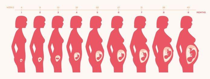 Sintomas durante el embarazo semana a semana
